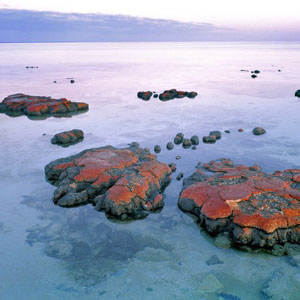 Evidence of ancient, microbial life admist a sunset at Shark Bay, in Western Australia, a UNESCO World Heritage Site