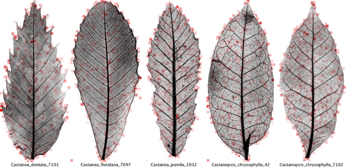 seeing the invisible history of leaves