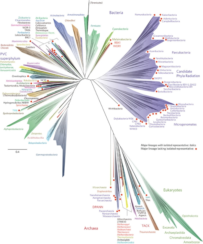 <strong>New tree of life. </strong> Researchers credit the CIPRES science gateway for easy access to XSEDE supercomputers as they added over 1000 bacteria and prokaryotes to the tree of life. Courtesy Laura Hug, Jill Banfield, and Nature Microbiology.