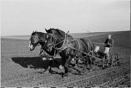 <strong>Feed the world. </strong>Planting corn in Jasper County, Iowa, ca. 1940. Cross breeding for favorable traits is done much more quickly today, thanks in part to Norman Borlaug's vision and effort. Courtesy US Library of Congress.