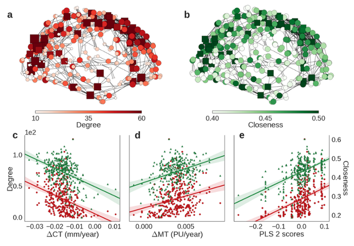 <strong>Mind readers.</strong> In both A and B, nodes are colored and sized by the corresponding centrality metric, and square nodes represent members of the 'rich club.' Both degree (red) and closeness centrality (green) were (C) negatively correlated with cortical shrinkage (CT) and (D) positively correlated with adolescent increase in myelination. Courtesy Kirstie Whitaker.
