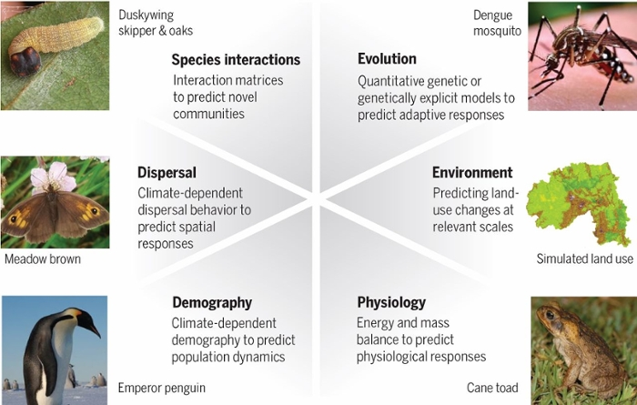 <strong>Crystal ball. </strong> To improve predictions of biological responses to climate changes, a valid biodiversity model should incorporate these six key biological mechanisms. 75 percent of models do not. Courtesy Mark Urban.