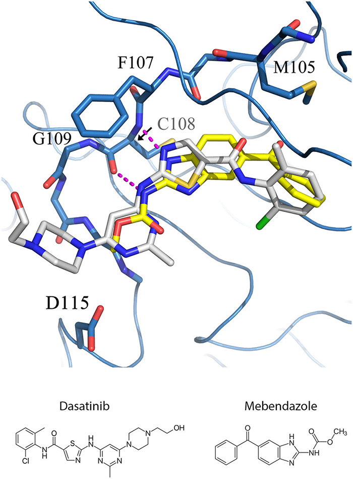 <strong>Deadly dance. </strong> Detailed interactions between mebendazole and a cancer target using the Lonestar supercomputer at TACC. Courtesy Zhi Tan, University of Texas MD Anderson Cancer Center.