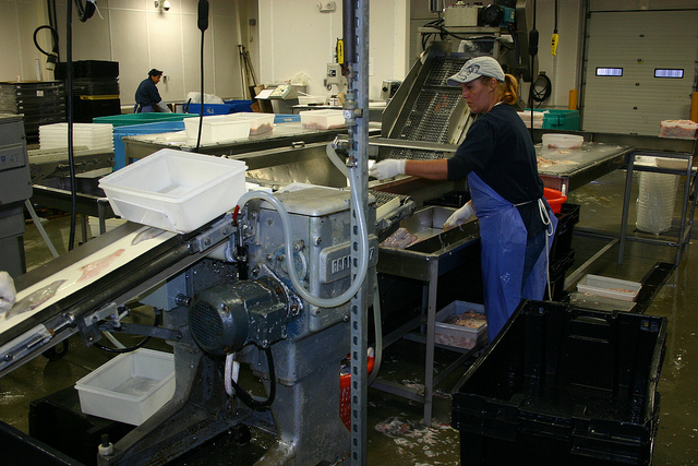 <strong>Mystery mix.</strong> Seafood caught with forced labor may be combined with legally-caught product at onshore processing facilities, making it even harder to trace product from plate to source.