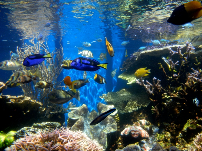 <strong>Ocean's eleven?</strong> Hackers used a tropical fish tank to infiltrate a casino. Just one more reason we need to get smarter about IoT security. Courtesy Janine. <a href='https://creativecommons.org/licenses/by/2.0/deed.en'>(CC BY 2.0)</a>