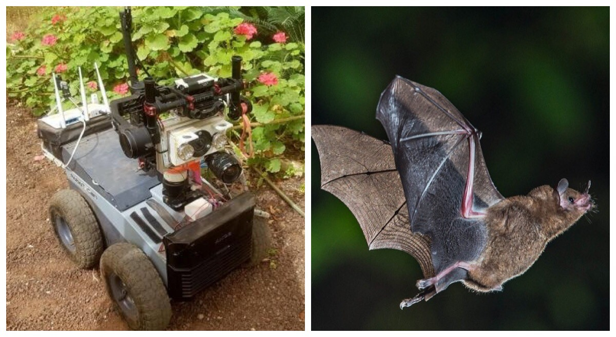 <strong>The Robat autonomous vehicle</strong> has an ultrasonic speaker that mimics the mouth of a real bat and microphones that mimic ears. Inspired by real bats, it uses echolocation to map its surroundings and help it navigate obstacles. Courtesy Eliakim, et al.