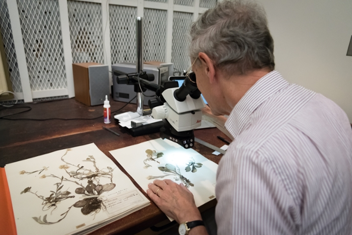 <strong>Scientific significance.</strong> Curator Paul Rothrock examines a few of the IU Herbarium's collection of over 150,000 specimens dating back to 1885. Courtesy Emily Sterneman.