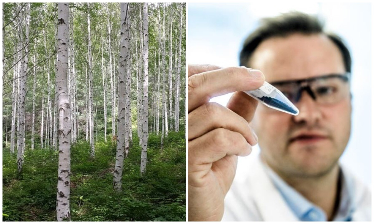 <strong>Birch biofuel.</strong> Chemical engineer Christian Hulteberg (r.) has developed a process to produce a new biofuel from wood byproducts leftover from paper production. Courtesy Kennet Ruona.