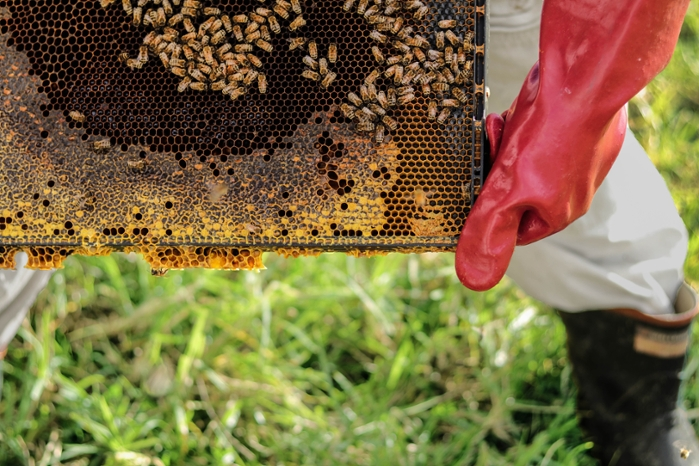 <strong>Farmhackers in Nigeria</strong> want to digitize traditional beekeeping. Sensors will monitor hives' temperature, humidity, and even sound, and report conditions remotely via a smartphone app. Courtesy Danika Perkinson/Unsplash.
