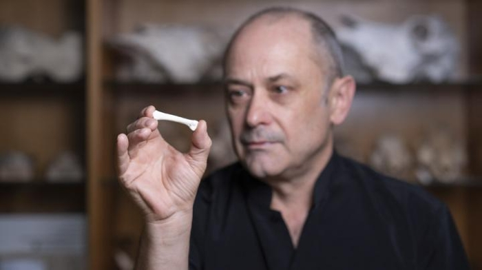 <strong>Learning more about our origins.</strong> Anthropologist Philip Piper inspects the cast of a third metatarsal bone from a new species of hominin. Courtesy, Lannon Harley, Australian National University.