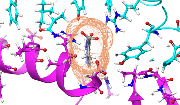 <strong>Blocking the coronavirus.</strong> The compound, shown gray, was calculated to bind to the SARS-CoV-2 spike protein, showing in cyan, to prevent it from docking to the Human Angiote sin-Converting Enzyme 2 (ACE2) receptor, shown in purple. Courtesy Micholas Smith/ORNL, US Dept. of Energy.