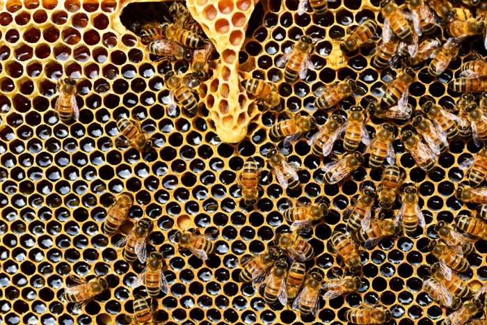 <strong>Scientists are scrambling</strong> to figure out why the honeybees that do the vital work of pollinating our crops are experiencing a rapid decline. Bioinformatician Eric Smith thinks at least part of the answer may lie in the bees' microbiome.
