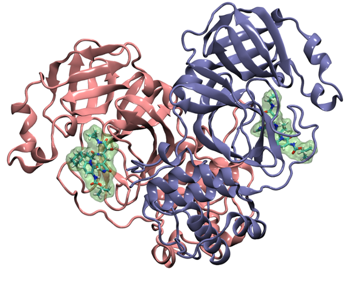 <strong>Stop the protease and stop the virus from forming.</strong> Another research target of the Cisneros group is a protein called the main protease. The crystal structure of the coronavirus main protease with bound inhibitor is shown here. Courtesy Cisneros Research Group, UNT.
