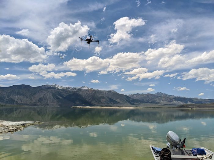 <strong>The multi-drone system</strong> was also tested at Mono Lake in California to survey the nearby gull population. Courtesy Kunal Shah.